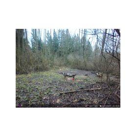 VIDEO - uni RGB adaptéry  2-221754 Propoj.kabel pro OEM kameru Ford Ranger (15-)